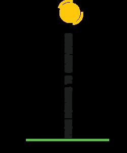Website design and hosting Treebranch Group